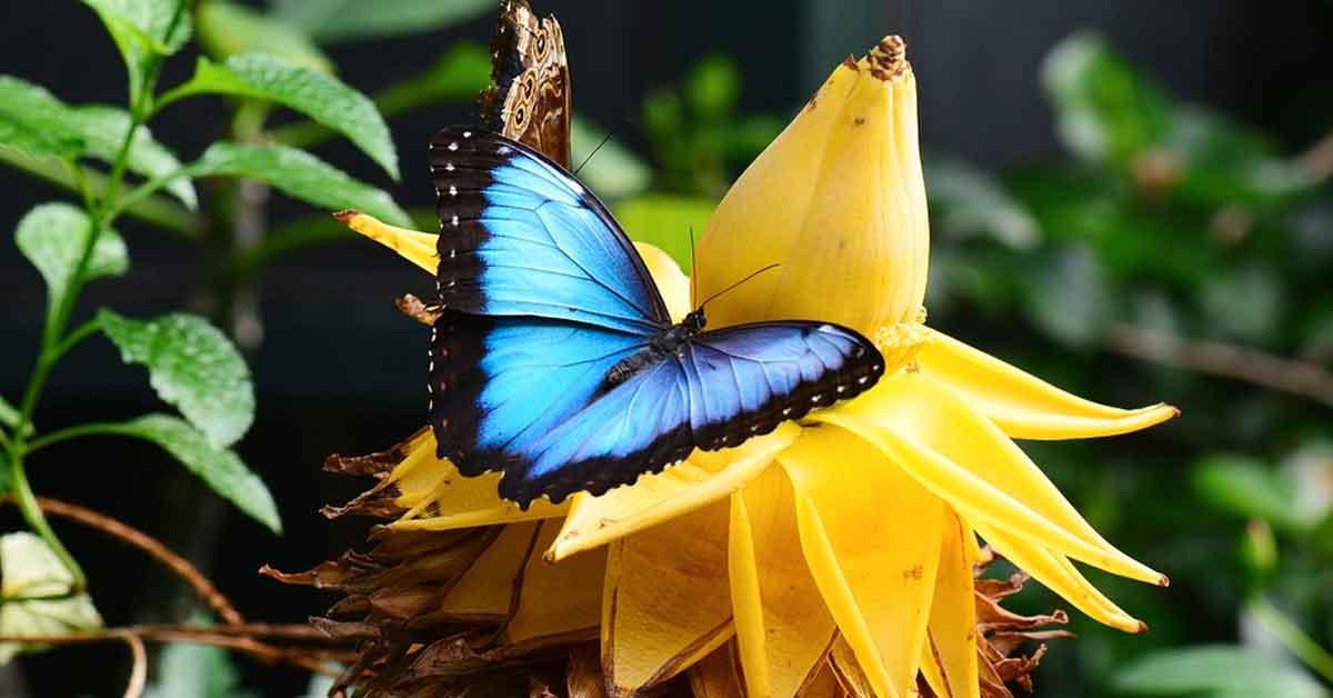 pv.mariposa